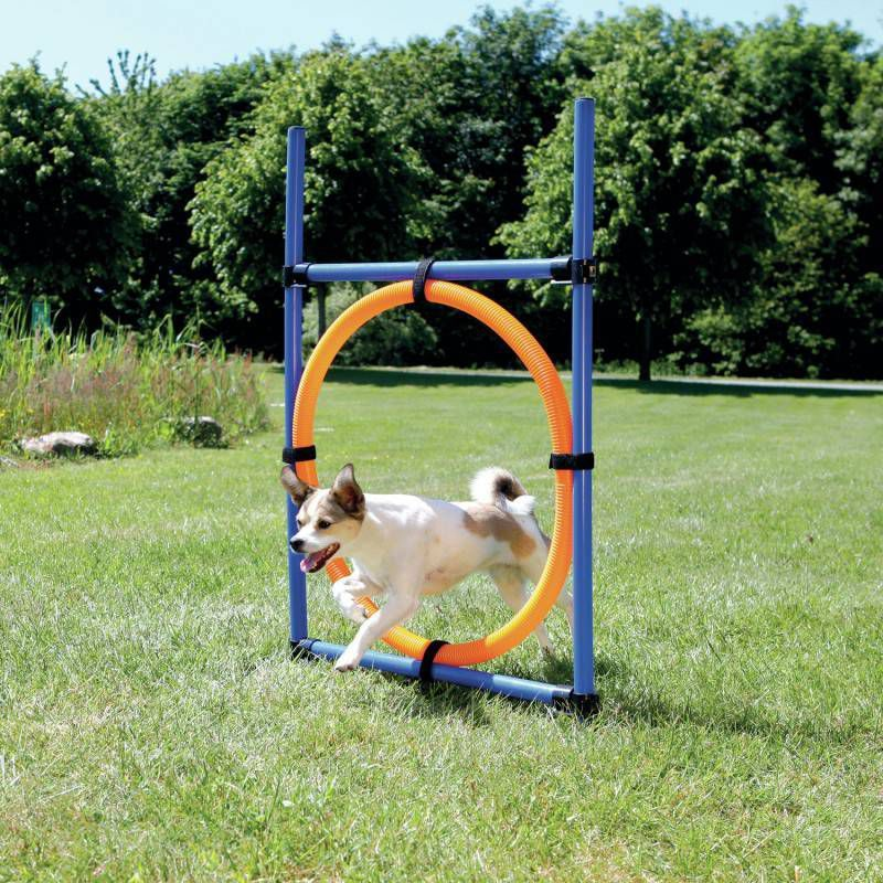 Trixie Trixie dog activity agility ring online kopen